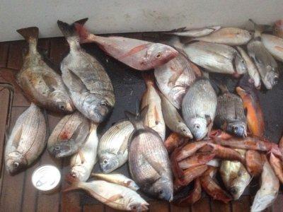 Salida en barco de pesca costera en Gijón 4 horas