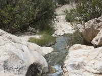 streams in the forest of Murcia
