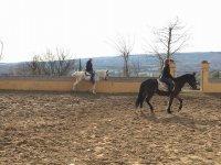 Cavalcare nella scuola di equitazione