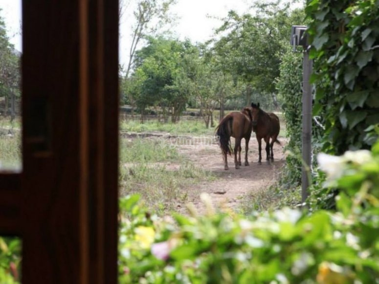 Caballos desde la ventana