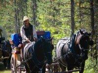 Recorrido en carro de caballos en Morella 45 min