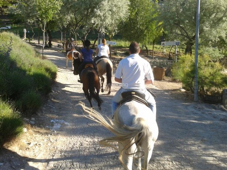 Horseback ride through the fields