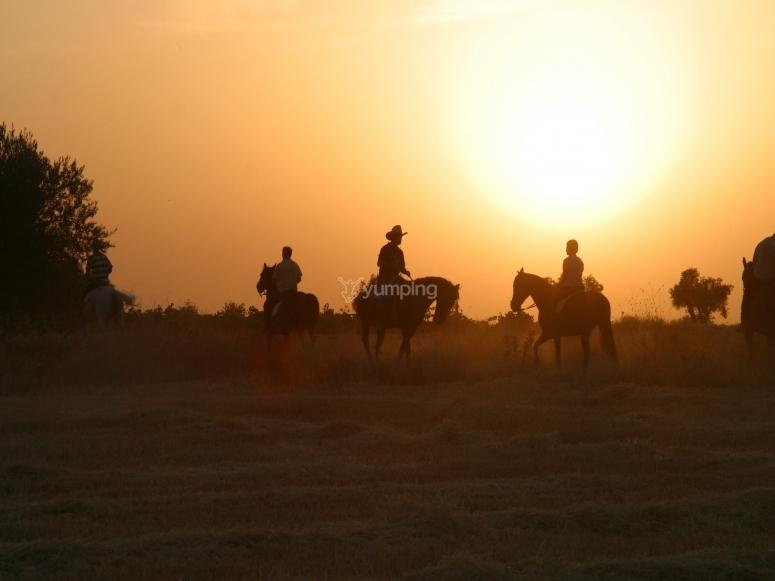 Horseback ride with the sunset