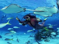 buceo entre animales