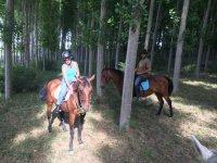 Con los caballos entre los arboles