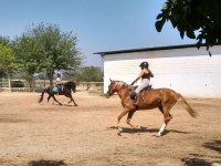 Getting a coordination between the horses