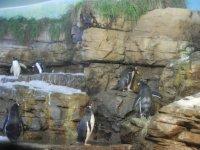 Pinguinos Oceanografic en Valencia