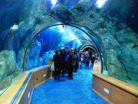 Tunel del Oceanografico