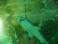 Vista inferior del tiburon