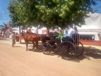 Horse car at the Cordoba fair