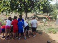 Observando las plantas de cerca