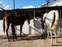 Horses cared for with the best pampering