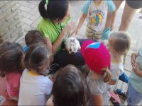 Explicando las caracteristicas del conejo
