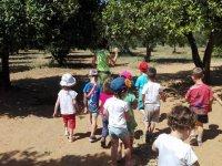 Visitando el bosque de arboles