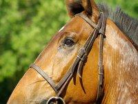 Clases y cursos de equitacion en Guillena