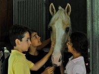 在马stable里宠爱马匹
