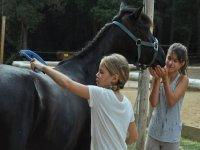 梳理和照顾马匹