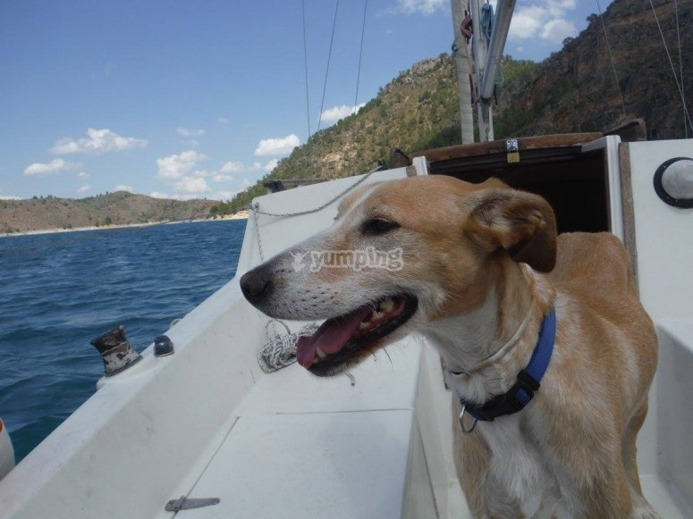 la marinera canina