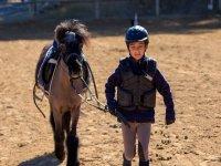 男孩将小马带到稳定的小马