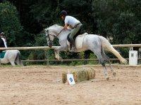 骑马障碍跳跃