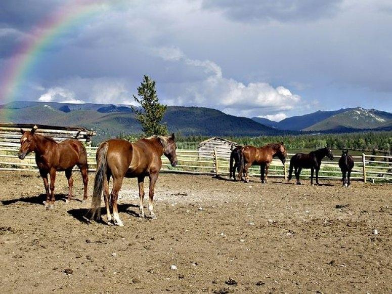 Cavalli sciolti nella scuola di equitazione