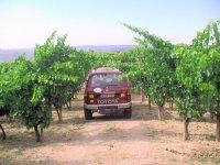 Centennial vineyard in the Priorat