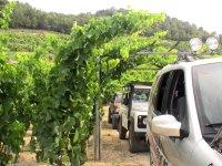 Ruta del vino a Tarragona