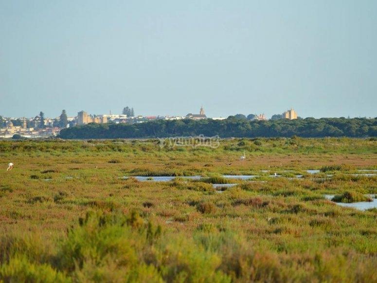 Visitando Doñana en todoterreno
