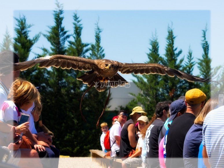 Vulture show