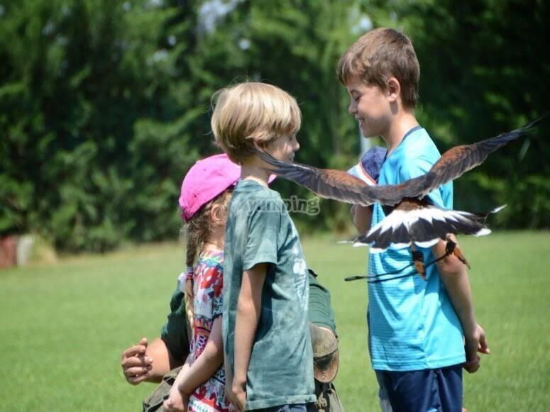 儿童中的鹰