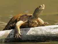 Galapago en un tronco