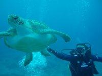海洋动物在特内里费