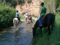 在河上与马匹