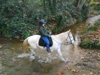 在河岸边的马