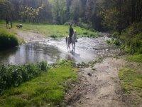 穿越小河的马匹