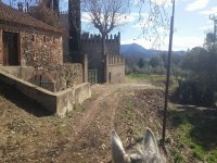 到达城堡的马匹