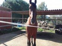 中心马stable的马匹
