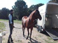 骑马老师旁边的马