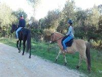 付诸实践他对马的了解