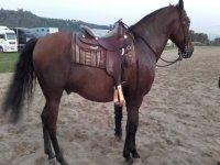 我们的全新马匹之一