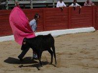 Ole torero