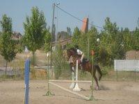 Clases de salto a caballo en Las Rozas
