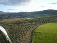 Campos de la Axarquía malagueña, donde volamos