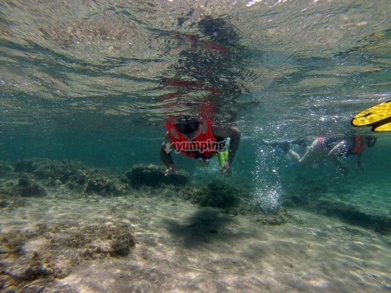 Admirando el fondo del mediterraneo