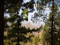 arboles en la montana