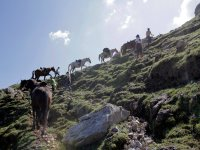 En el Parque Natural de Redes con nuestros caballos