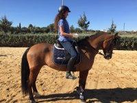 En clase de doma sobre el caballo