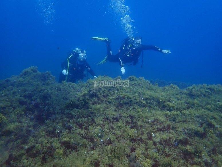 在普拉亚戴尔因格莱斯潜水