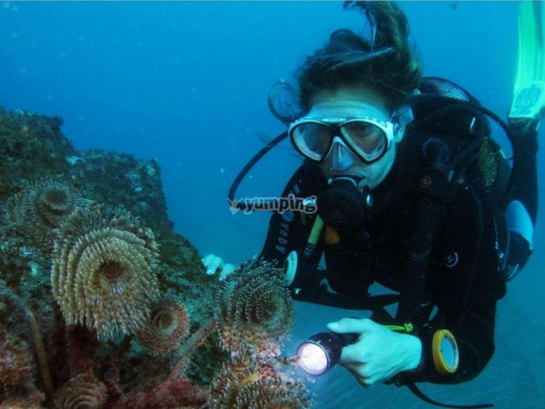 潜水员调查珊瑚礁
