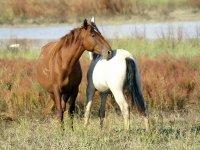 Alleviamo i nostri cavalli in semi-libertà